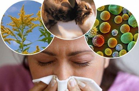 Átfogó, 104 pontos allergiavizsgálat