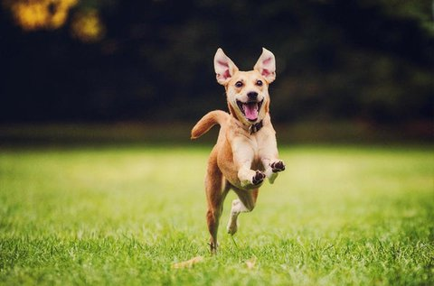 60 perces műnyulas kutyafuttatás hétvégén