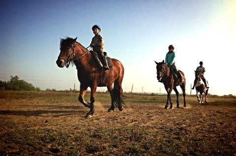 60 perces futószáras lovaglás kezdőknek