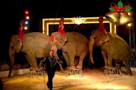 Karácsonyi műsor az Eötvös Cirkuszban