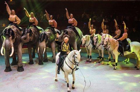 Belépő a Magyar Nemzeti Cirkusz gálaműsorára