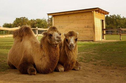 Siófoki állatpark belépők 3 kör tevegeléssel