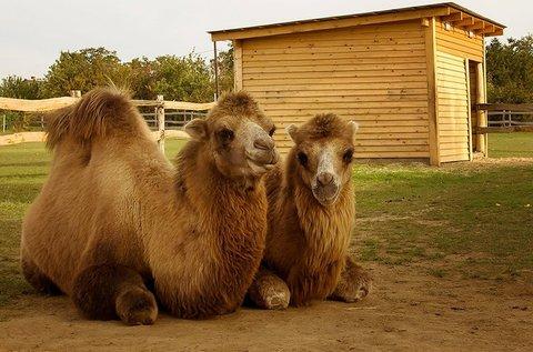 Belépők a siófoki Bella Állatparkba tevegeléssel